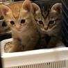 可愛い親子猫の里親様を募集してます