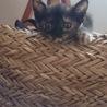 生後1ヶ月の可愛いサビ猫、メスです。 サムネイル2