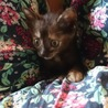生後1ヶ月の可愛いサビ猫、メスです。 サムネイル3