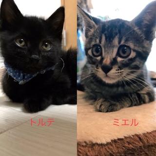 仲良しイケメン黒猫とキジトラ兄弟!