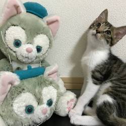3匹の兄妹猫ちゃん