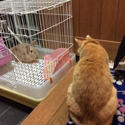 猫ちゃんと対面♬