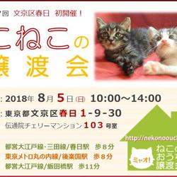 8月5(日)第37回★ミャオ!ねこのおうち譲渡会★飯田橋