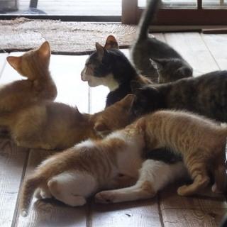 生後2か月、地域猫が生んだ6匹の人懐こい子猫