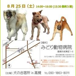 「犬の合宿所in高槻」の里親募集会