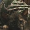生後1ヶ月の可愛いサビ猫、メスです。 サムネイル5