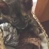 生後1ヶ月の可愛いサビ猫、メスです。 サムネイル7