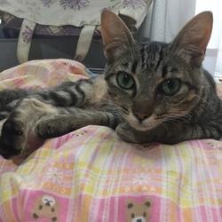 猫エイズ陽性の子猫の里親さん探し