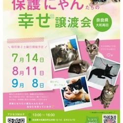 保護にゃんたちの幸せ譲渡会in大和高田市