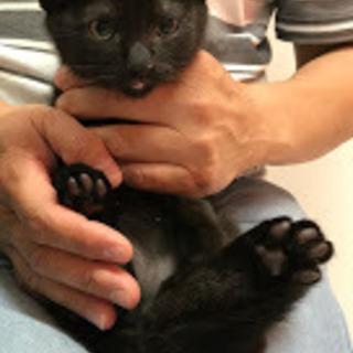 丸顔の黒猫の男の子