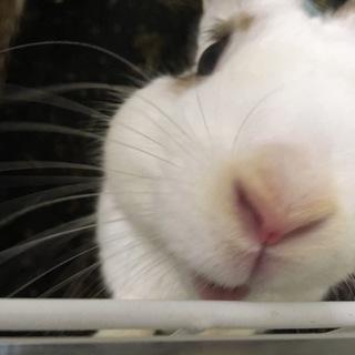 里親募集ウサギさん