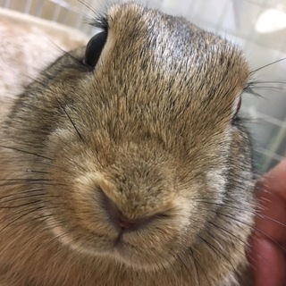里親募集ウサギさん2