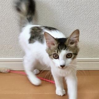 甘えんぼで人も猫も大好きなおかちゃん4ヶ月