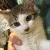 甘えんぼで人も猫も大好きなおかちゃん4ヶ月 サムネイル2