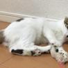 甘えんぼで人も猫も大好きなおかちゃん4ヶ月 サムネイル4