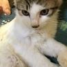 甘えんぼで人も猫も大好きなおかちゃん4ヶ月 サムネイル5