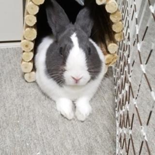 ミニウサギ オス 10ヵ月ほど