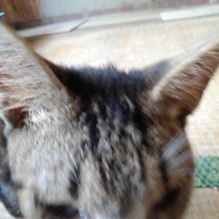 大人しい猫です。甘えん坊です。