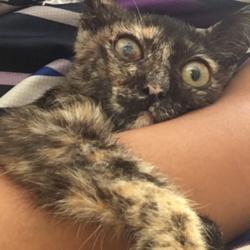 愛猫を死なせてしましました。
