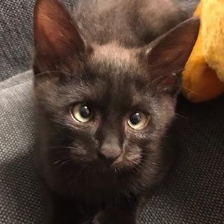 寄り目が可愛い黒猫君の里親様を募集しています。