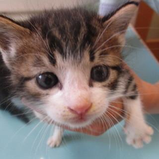 センターから引き出した可愛い子猫ちゃんです☆