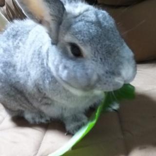 元気なミニウサギです!