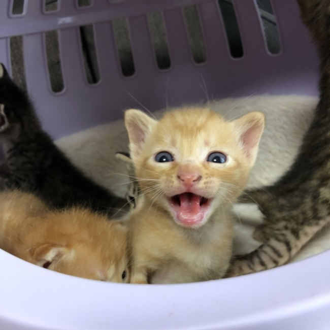 Cat fieldのカバー写真