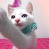 美系の青い目☆ナイトくん 2ヵ月半 サムネイル2