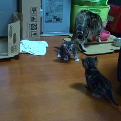 子猫の離乳食、トイレ等に対して、ご指導下さい。