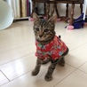【子猫】おっとりキジトラの男の子 サムネイル2
