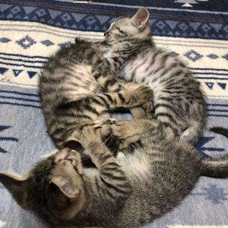 生後2ヶ月子猫2匹