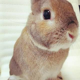 元気なオスウサギのチェスです♪