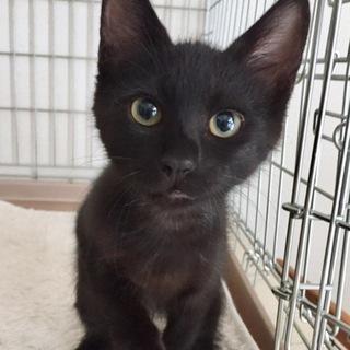 黒ネコ 男の子