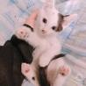 6/13に産まれた子猫です!