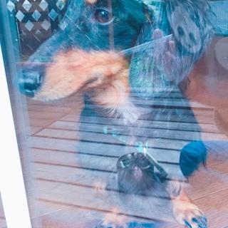 捨てられていた犬