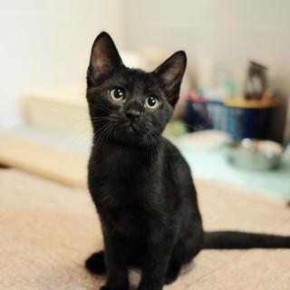 穏やか、おっとり、美しい黒猫