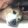 懐かない保護犬(1ヶ月目)