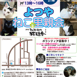 8月11日(土) 地域猫から社会猫へ FIPフリー 四谷猫廼舎 里親会(ボランティア募集中)