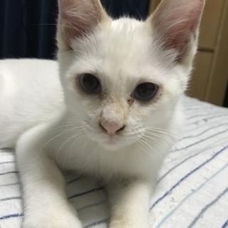 クリーム色のイケメン子猫くん!