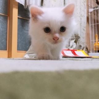 ふわふわ子猫ちゃん