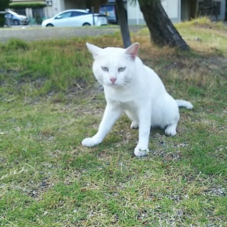 置き去りにされた超甘えん坊の白猫さん