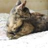 小柄で人馴れバツグンの美猫サビさん サムネイル2