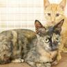 小柄で人馴れバツグンの美猫サビさん サムネイル3