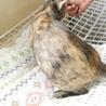 小柄で人馴れバツグンの美猫サビさん サムネイル4