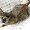 小柄で人馴れバツグンの美猫サビさん サムネイル6