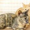 小柄で人馴れバツグンの美猫サビさん サムネイル7