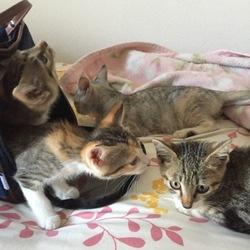 保護猫×2