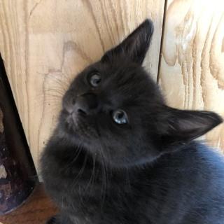 お腹ポンポンフレンドリーな黒猫♪