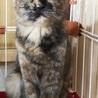 美猫なさびねこ サムネイル2