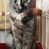 美猫なさびねこ サムネイル3